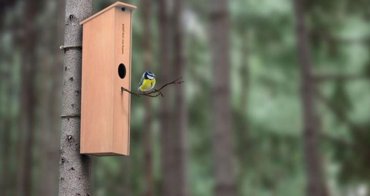 Nestling Box by Solovyovdesign
