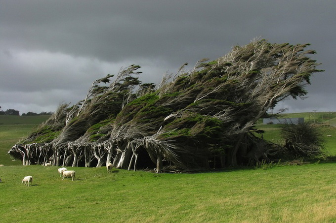 Slope Point Trees in New Zealand